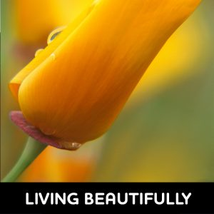 Living Beautifully - LIVINGBEAUTIFULLY 300x300